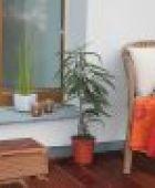 Terrassenbau - Eigenbau ist eine günstige Alternative zum Handwerker