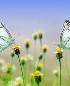 Tipps zur effektiven und schönen Bepflanzung rings um die Terrasse