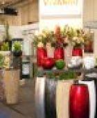 Grün ist schöner: So machen Pflanzen Ihr Zuhause noch wohnlicher