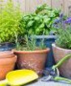 Die richtige Balkonbepflanzung – mit diesen Tipps hat man lange was davon