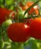 Gemüseanbau: Was Sie beachten sollten