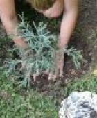 Baum pflanzen - der richtige Gartenbaum